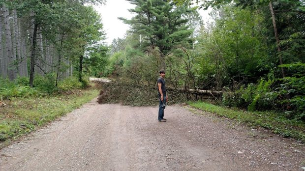 If a Tree Falls in the Forest, You have to Move It  – We Got