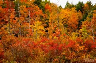 fall_foliage-3x2-wm_small