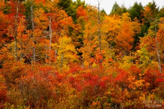 fall_foliage-3x2-wm_small