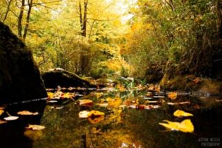 forest_foliage_i-3x2-wm_small