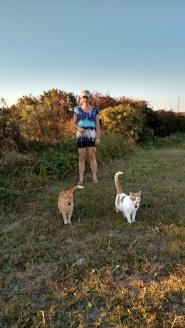cats-walking-small