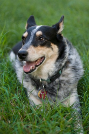 dog-small