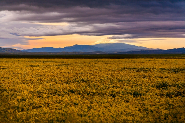 Superbloom-Carrizo-Plain-National-Monument-CA
