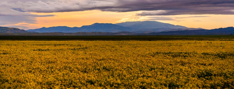 Superbloom-Carrizo-Plain-National-Monument-CA