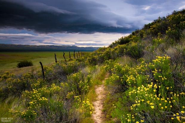 Carrizo-Plain-CA-Hiking