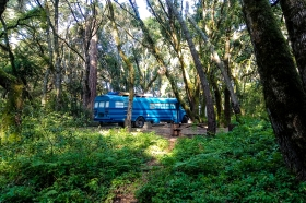 campsites in Hernry Cowell Redwoods State Park