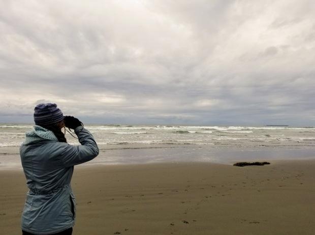 Whale watching at kalaloch beach forks WA