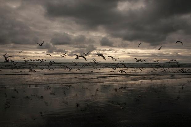 Seagulls Kalaloch Beach WA