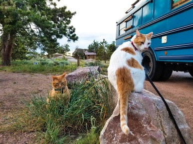 Cats Vedauwoo Campground WY