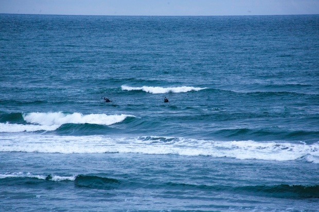 Whales-Kalaloch-Beach-WA